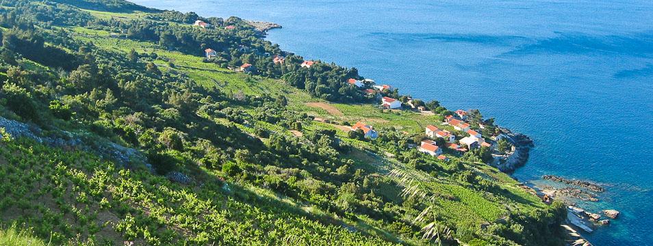 Bucavac wijngaard