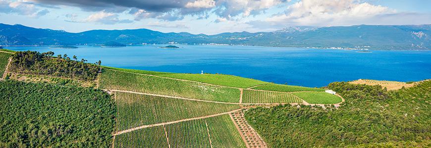 Wijnhuizen en wijnmakers in Kroatië